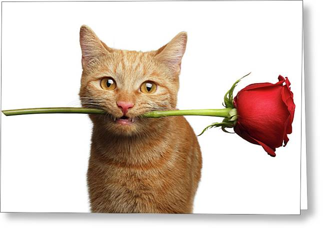 Portrait Of Ginger Cat Brought Rose As A Gift Greeting Card