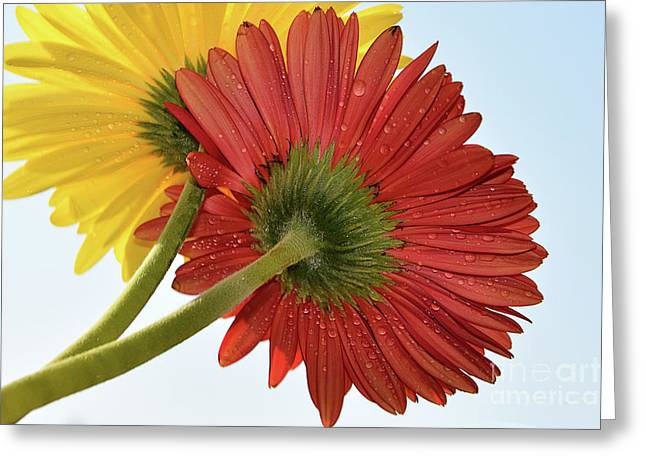 Red And Yellow Greeting Card by Elvira Ladocki