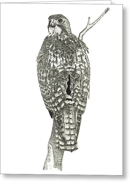 Red-tailed Hawk Greeting Card by Marcus England