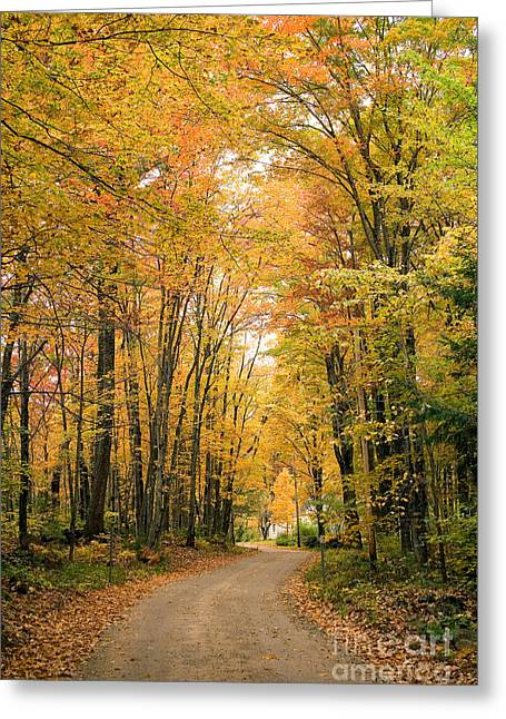 Road Through Autumn Woods Greeting Card by Larry Landolfi