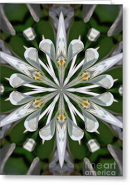 Spring Pink Kaleidoscope Greeting Card by J McCombie