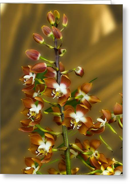 Stunning Orchids Greeting Card by David French