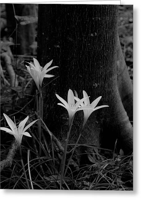 Swamp Lilies Greeting Card