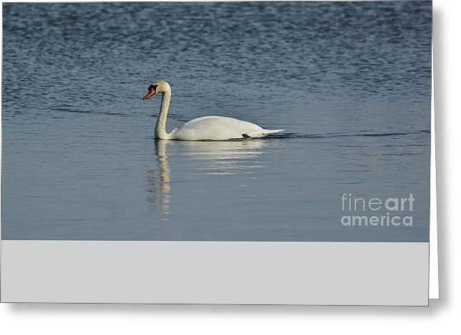 Swan Greeting Card by Esko Lindell