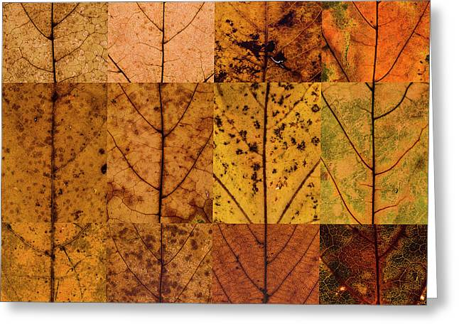 Swatches - Autumn Leaves Inspired By Gerhard Richter Greeting Card