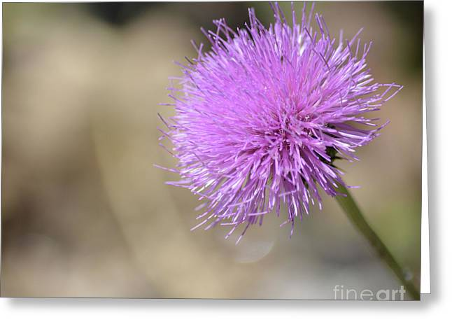Texas Thistle  Greeting Card by Ruth Housley