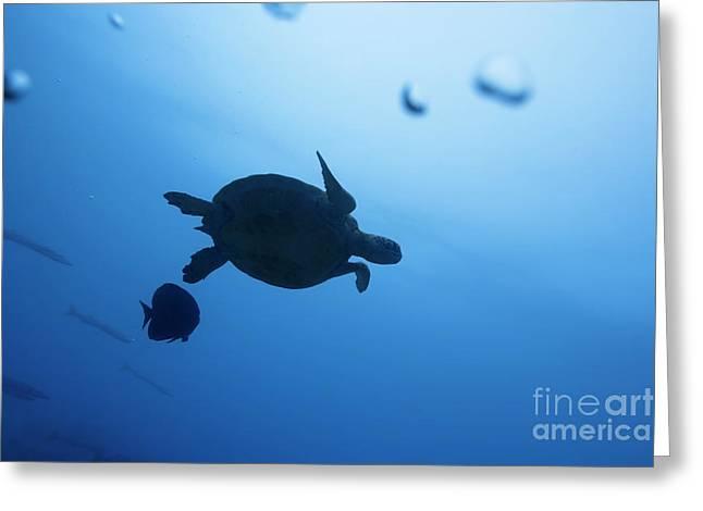 Snorkel Greeting Cards - Turtle Greeting Card by MotHaiBaPhoto Prints