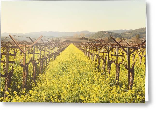Vineyard In Spring With Vintage Instagram Film Style Filter Greeting Card