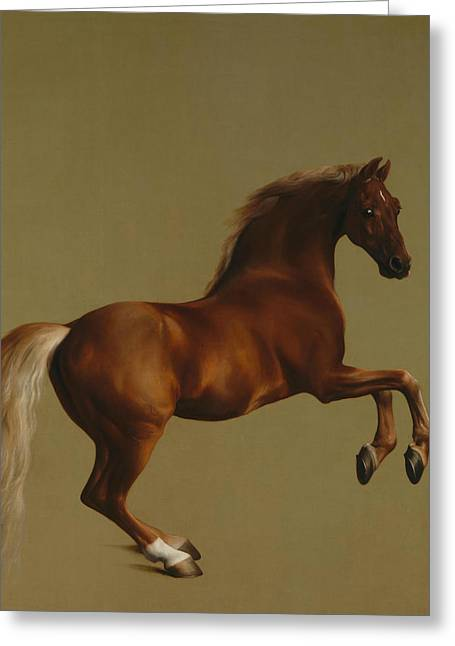 Whistlejacket Greeting Card by George Stubbs