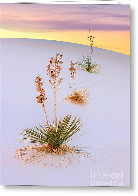 White Sands National Monument Greeting Card by Henk Meijer Photography