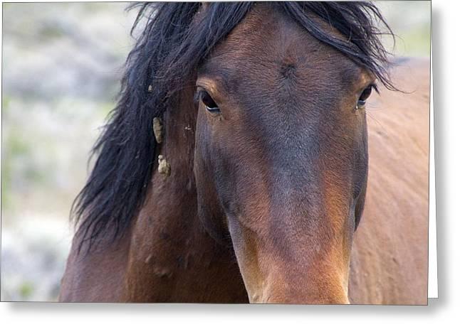 Wild Mustang Horse Greeting Card