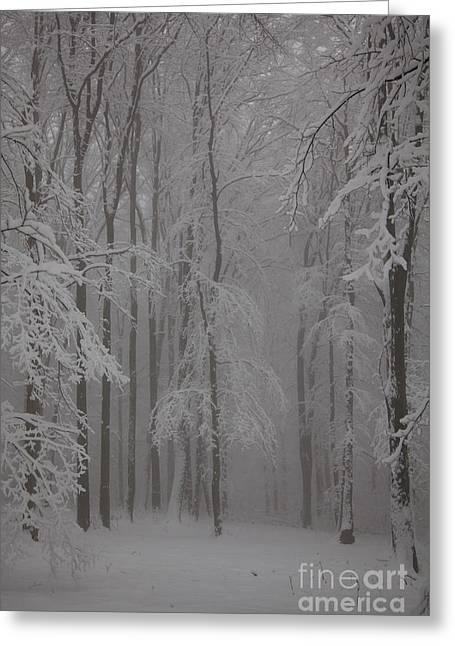 Winter Greeting Card by Gabriela Insuratelu