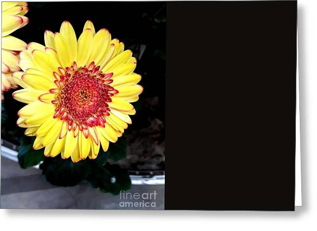 Yellow Flower  Greeting Card by Joyce Woodhouse