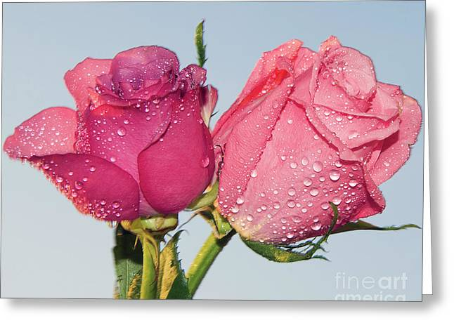 Two Roses Greeting Card by Elvira Ladocki