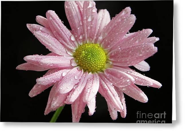 Pink Flower Greeting Card by Elvira Ladocki