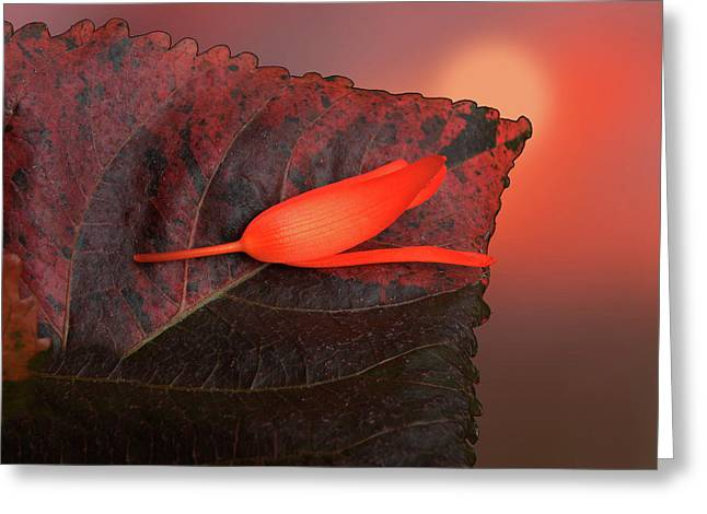 Greeting Card featuring the photograph 4366 by Peter Holme III
