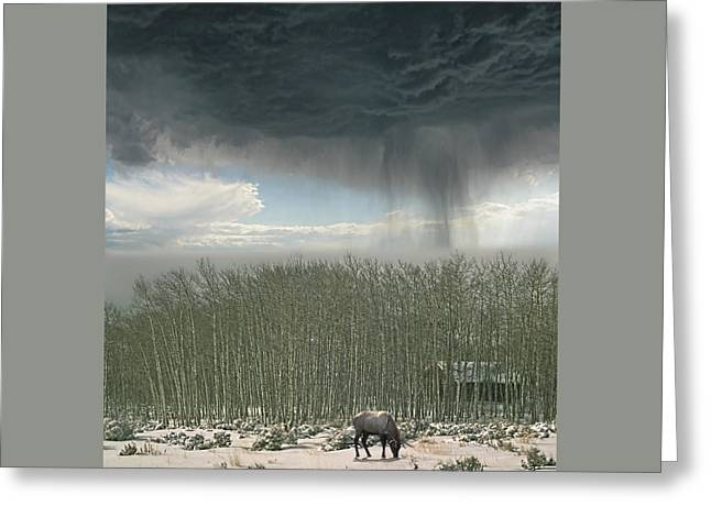 Greeting Card featuring the photograph 4375 by Peter Holme III
