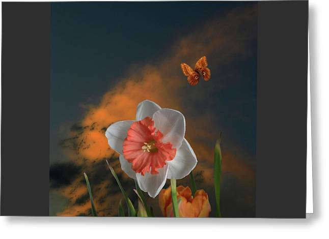 Greeting Card featuring the photograph 4413 by Peter Holme III