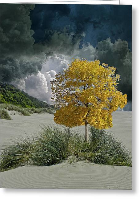 Greeting Card featuring the photograph 4422 by Peter Holme III