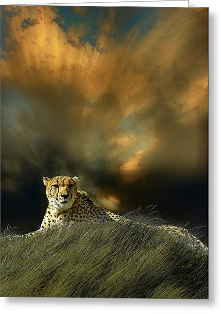 Greeting Card featuring the photograph 4452 by Peter Holme III