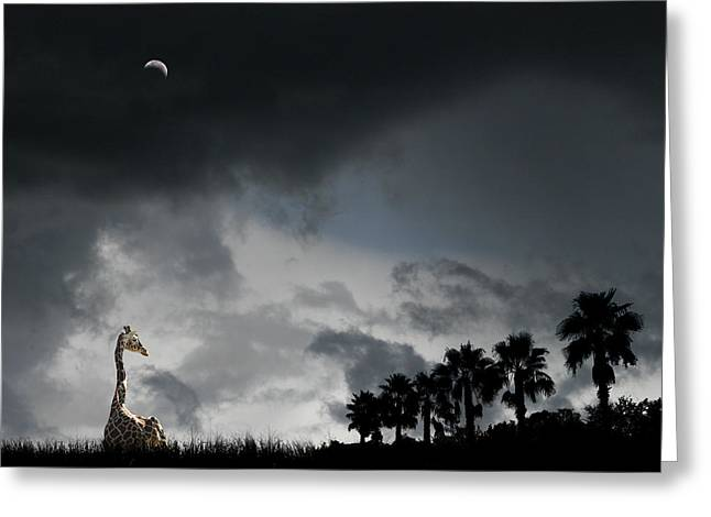 Greeting Card featuring the photograph 4458 by Peter Holme III