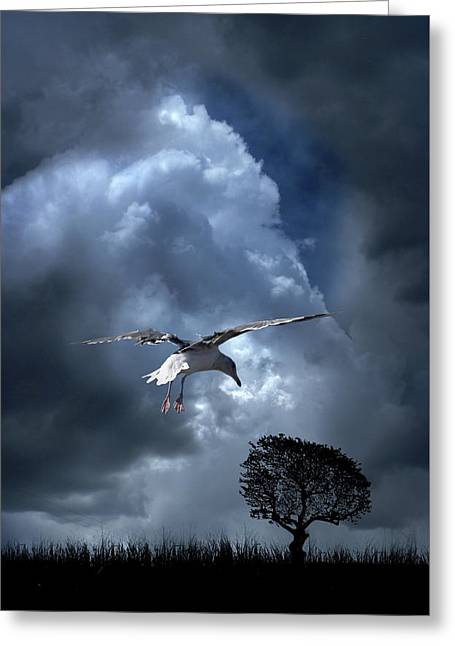 Greeting Card featuring the photograph 4472 by Peter Holme III