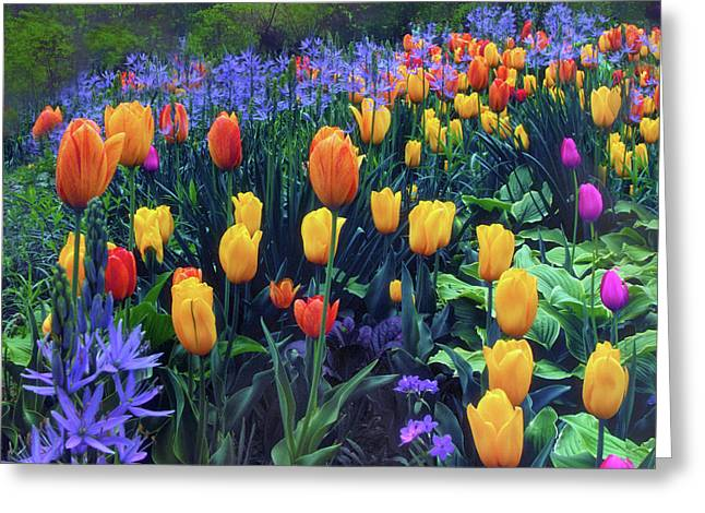 Procession Of Tulips Greeting Card