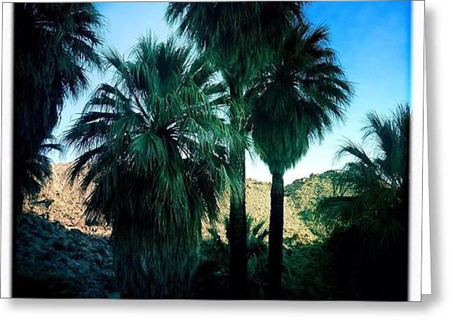 49 Palms Oasis. Have You Ever Been To Greeting Card