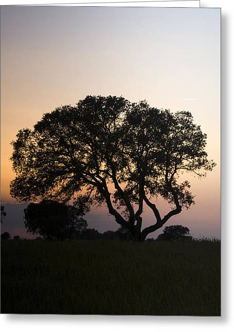 Alentejo Greeting Card by Andre Goncalves
