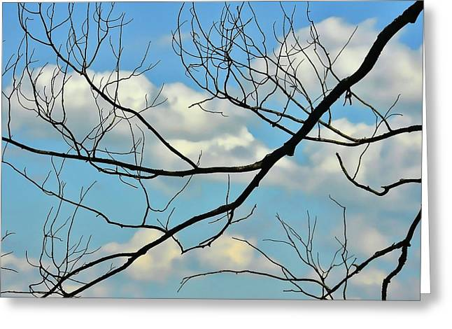 Bare Branches Greeting Card by JAMART Photography