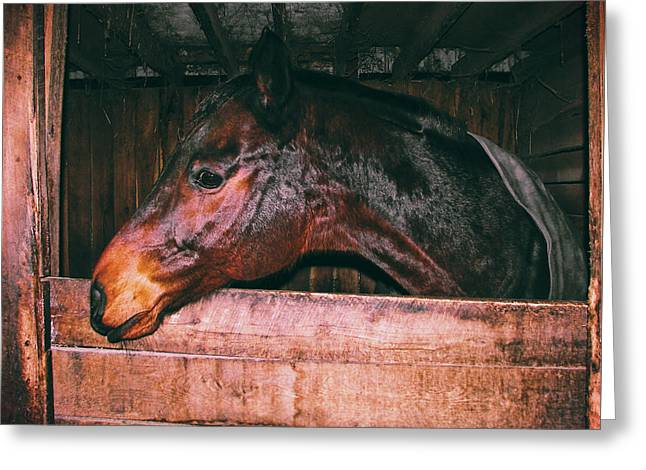Greeting Card featuring the photograph Barn Bay Friend by Dressage Design