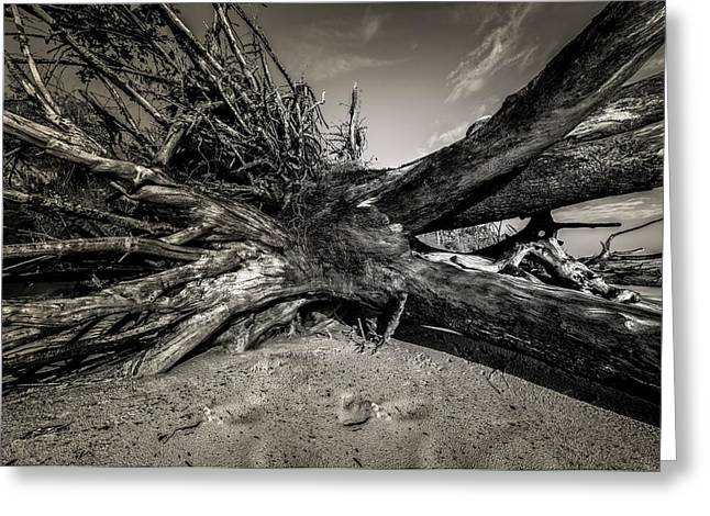 Greeting Card featuring the photograph Black Rock Beach by Peter Lakomy