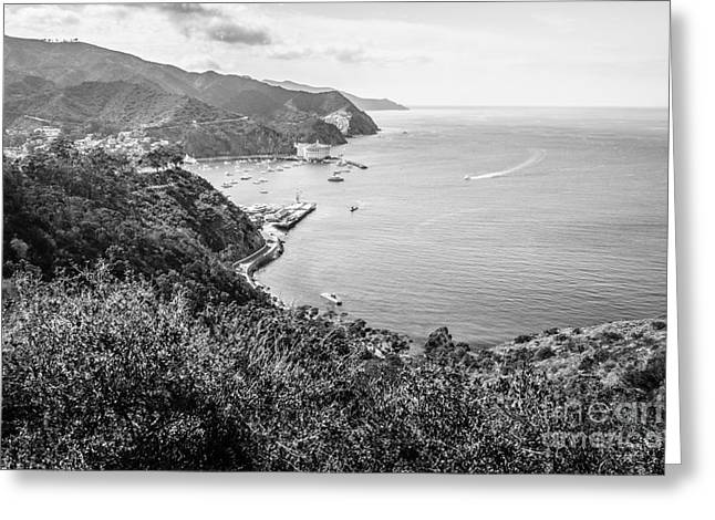 Catalina Island Avalon Bay Black And White Photo Greeting Card by Paul Velgos