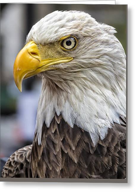 Challenger The Bald Eagle Greeting Card