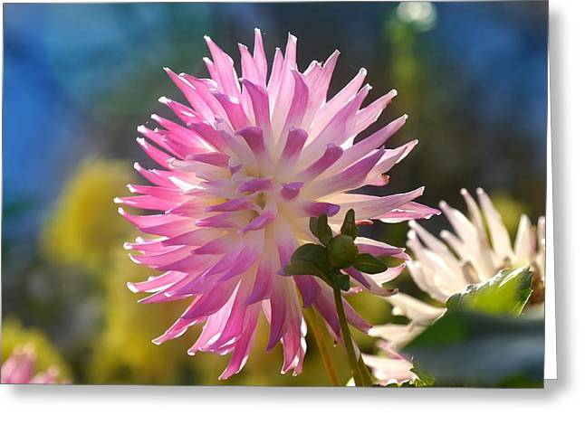 Greeting Card featuring the photograph Flower Edition by Bernd Hau