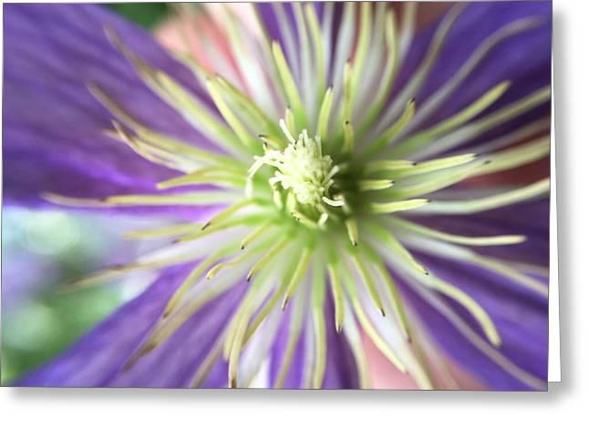 Flower Greeting Card by Maxim Tzinman