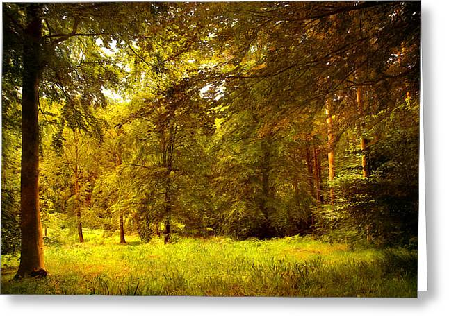 Forest Greeting Card by Svetlana Sewell