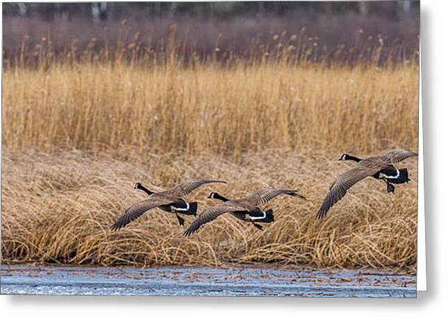 5 Geese Greeting Card by Paul Freidlund