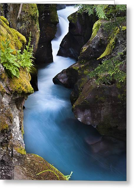 Greeting Card featuring the photograph Glacier National Park 100th Anniversery by Kevin Blackburn