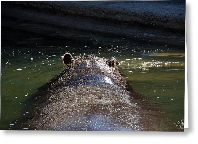 Sahara Sunlight Greeting Cards - Hippo Greeting Card by Thea Wolff