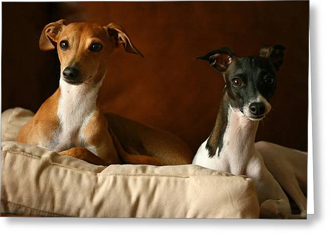 Italian Greyhounds Greeting Card by Angela Rath