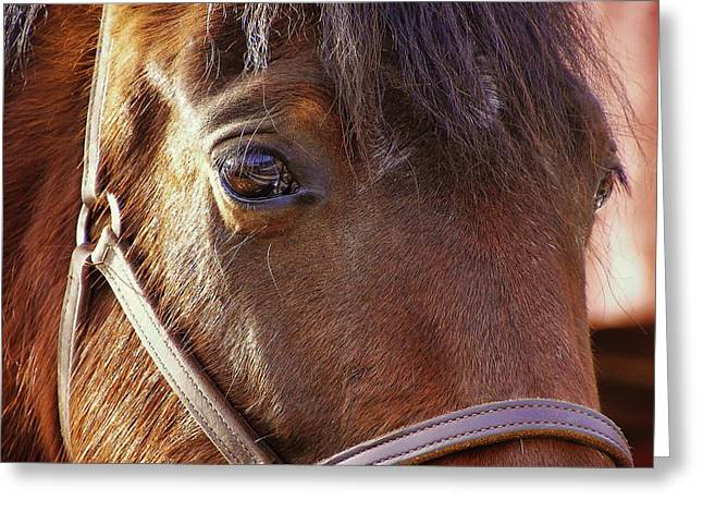 Morgan Horse Greeting Card by JAMART Photography