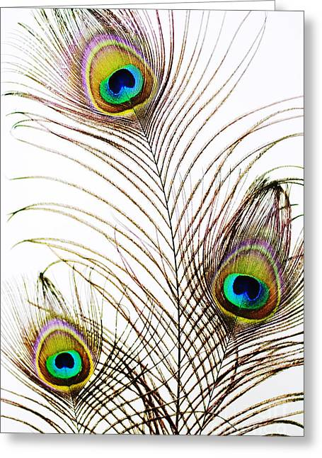 Peacock Feathers Greeting Card by Mary Van de Ven - Printscapes