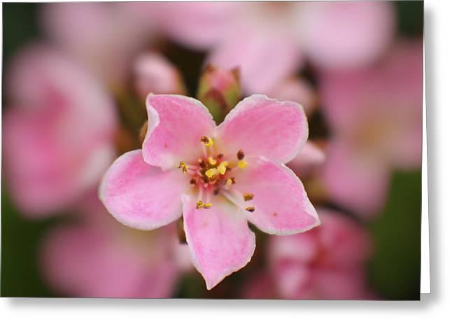 5 Pink Petals Greeting Card by Ella Kaye Dickey