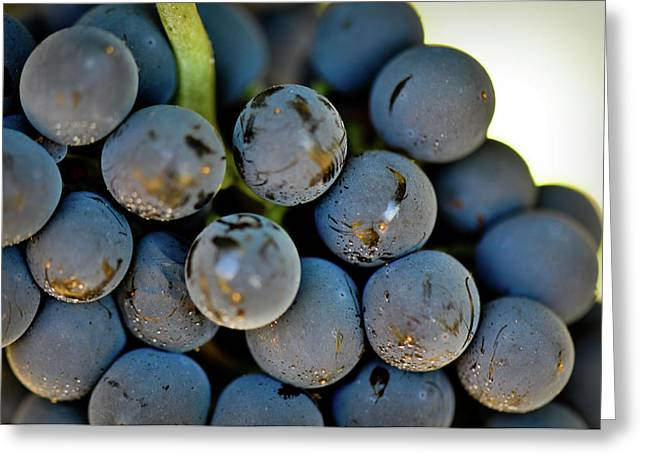 Red Grapes Greeting Card by Brandon Bourdages