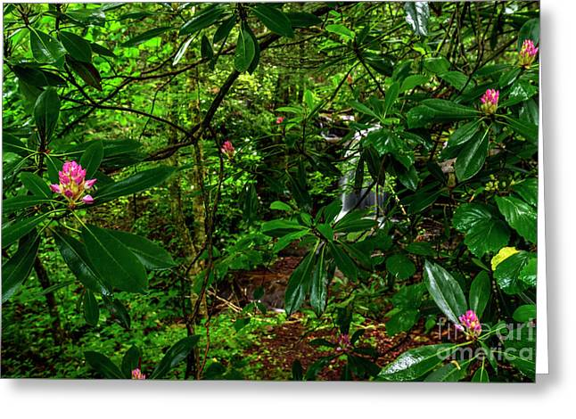 Rhododendron And Waterfall Greeting Card by Thomas R Fletcher