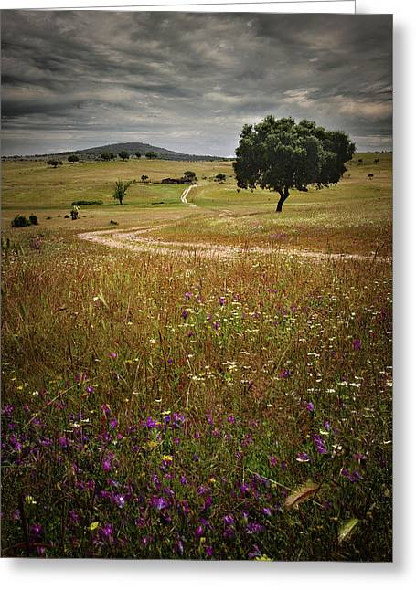 Rural Landscape Greeting Card by Carlos Caetano