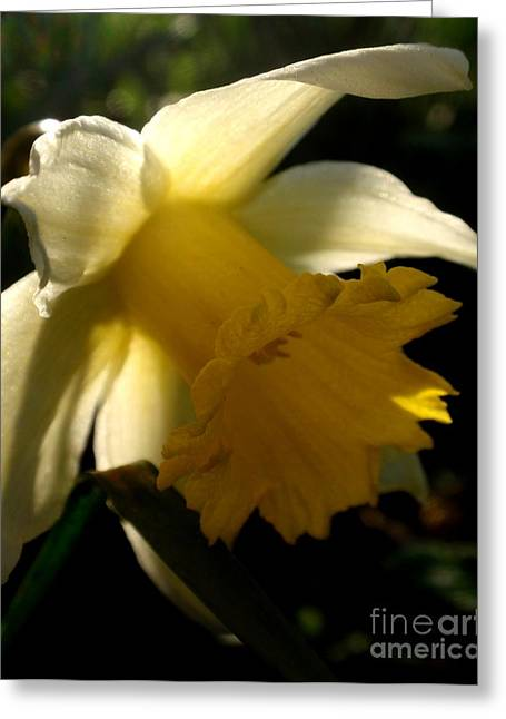 Scent Of Spring Greeting Card by Valia Bradshaw
