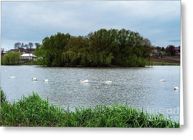 Staya White Birds Swans.  Greeting Card by Oleksandr Masnyi