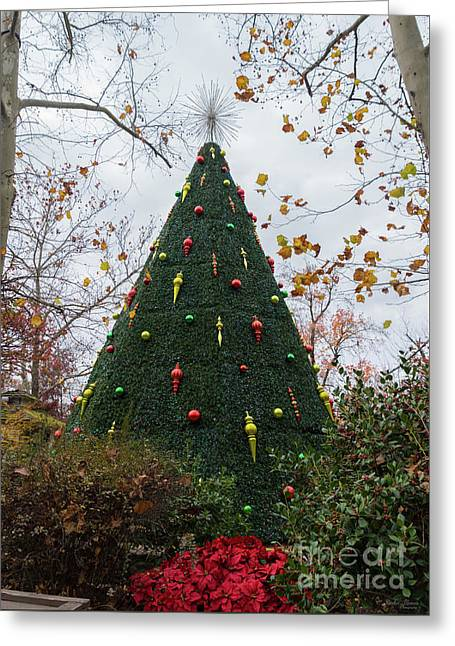 5 Story Sdc Tree Greeting Card by Jennifer White